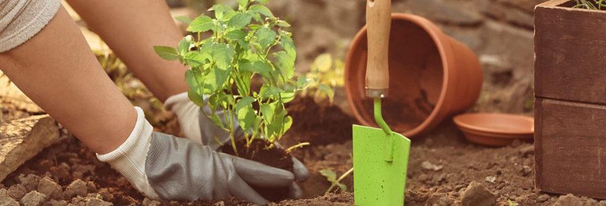 cultiver les aromates